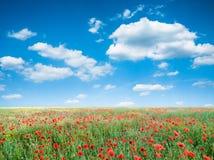 Maczków kwiatów pola krajobraz Obraz Royalty Free