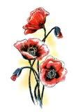 Maczki. Akwareli lata kwiaty Obrazy Stock