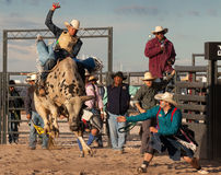 Mad Bull Professional Rodeo Bull Riding Stock Photos