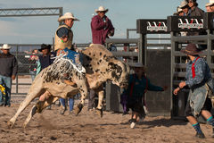 Mad Bull Professional Rodeo Bull Riding Stock Photo