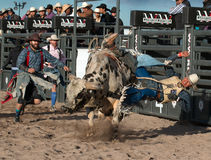 Mad Bull Professional Rodeo Bull Riding Stock Photography