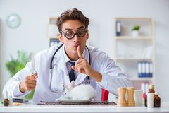 The mad crazy doctor preparing to eat rabbit Royalty Free Stock Photos
