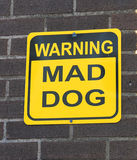 Mad dog. Stock Images
