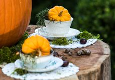 Mad Hatter and Alice Thanksgiving or Halloween Pumpkins Tea Party in the Forest royalty free stock photography