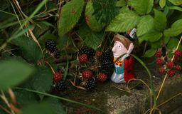 Mad hatter hiding in the brambles royalty free stock photo