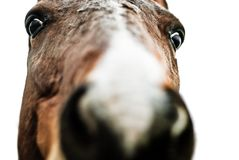 Mad horse Royalty Free Stock Photography