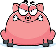 Mad Little Pig Stock Photos