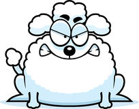 Mad Little Poodle Royalty Free Stock Photo