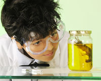 Mad Scientist with Specimen. Closeup image of a young mad scientist checking out a jar containing a mouse specimen Royalty Free Stock Images