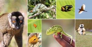 Madagascar Fotos de Stock