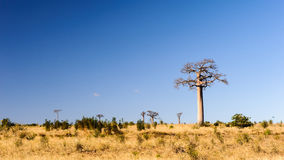 Madagascar, Africa Royalty Free Stock Images