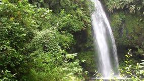 Madagascar Amber Mountains parkerar, nedgångar stock video