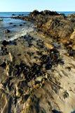Madagascar    andilana beach seaweed in  and rock Royalty Free Stock Photos
