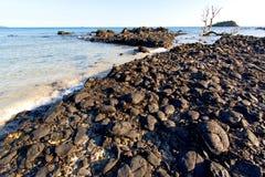 madagascar    andilana     seaweed        dead tree Stock Image