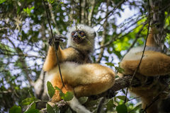 Madagascar Royalty Free Stock Photos