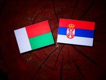 Madagascar flaga z serb flaga na drzewnym fiszorku odizolowywającym obrazy stock