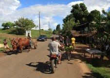 Madagascar gata Arkivbilder