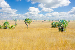 Madagascar landscape savanna desert Stock Images