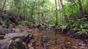 Madagascar landscape with small creek. Beatiful landscape of protected area in Masoala - Madagascar virgin nature wilderness scene with wild creek stock footage