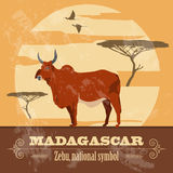 Madagascar. National symbol zebu. Retro styled image. Royalty Free Stock Photography