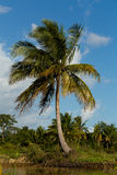 Madagascar river landscape and coconut tree Stock Image