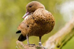 Madagascar Teal Royalty Free Stock Photos