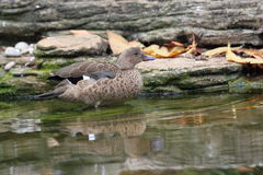 Madagascar teal Royalty Free Stock Images
