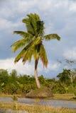 Madagascar traditional river landscape Stock Image