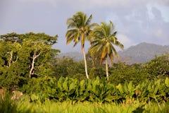 Madagascar traditional river landscape Stock Photo
