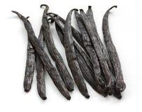Madagascar vanilla beans Stock Images