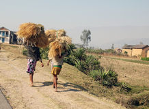 Madagascar women carrying stacks of hay Royalty Free Stock Image