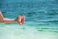 Madagascariensis Cassis στο χέρι στον παράδεισο Playa παραλιών του νησιού Cayo βραδύτατου, Κούβα Διάστημα αντιγράφων για το κείμε Στοκ εικόνα με δικαίωμα ελεύθερης χρήσης