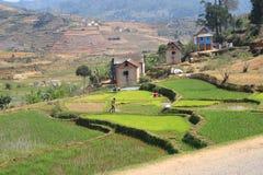 Madagaskar Stockfotos