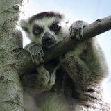 madagaskar Stockfoto