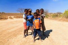 Madagassiska kalla grabbar royaltyfri foto