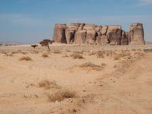 Madain Saleh, arkeologisk plats med Nabatean gravvalv i Saudiarabien KSA royaltyfria bilder