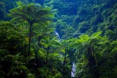 Madakaripura瀑布,东爪哇省,印度尼西亚 库存照片