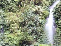 Madakaripura Waterfall in Bromo Tengger Semeru National Park stock photography