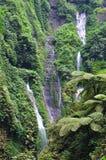 Madakaripura waterfall and ferns at Bromo Royalty Free Stock Photography