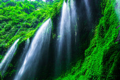 Madakaripurawaterval in het Nationale Park van Bromo Tenger Semeru Royalty-vrije Stock Afbeeldingen