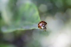 Madame Bug Photos libres de droits