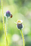Madame Bug Image stock