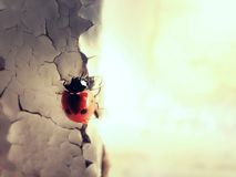 Madame Bug sur le mur Photo libre de droits