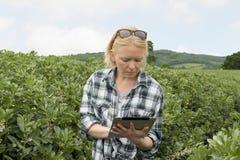 Madame dans la ferme regarde fixement sérieusement sur son écran du ` s de périphérique mobile images stock
