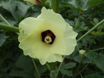 Madame Finger Flower photo libre de droits