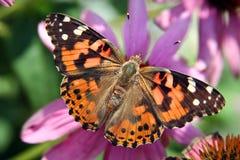 Madame peinte Butterfly Photo stock