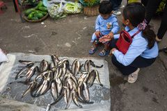 Madame vendant des poissons au marché de Battambang sur le Cambodge Photographie stock libre de droits