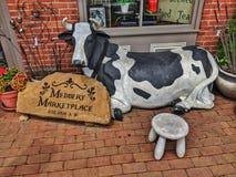 Madbery rynku krowa Coshocton, Ohio fotografia royalty free