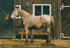 Maddy horse Stock Photo