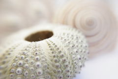 Made by nature. Sea shells Stock Photos